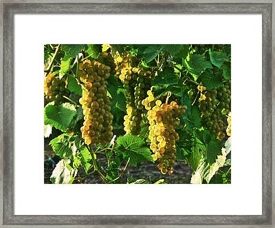 Framed Print featuring the photograph Vignole Berries by William Fields