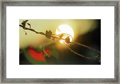 Vine Light Framed Print