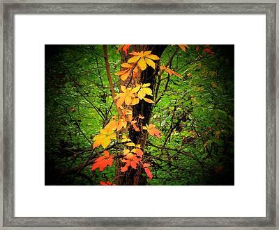 Vine Framed Print by Michael L Kimble