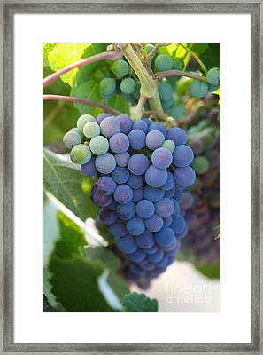 Vine Ripe Framed Print by Brooke Roby