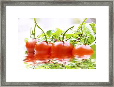 Vine Tomatoes And Salad With Water Framed Print by Simon Bratt Photography LRPS