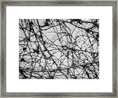 Framed Print featuring the photograph Vine Web by Atom Crawford