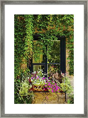 Vines Growing On A Wall And Flowers Framed Print by David Chapman