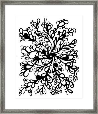 Vines Framed Print by HD Connelly