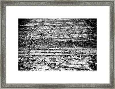 Vines Framed Print by Paul Bartoszek
