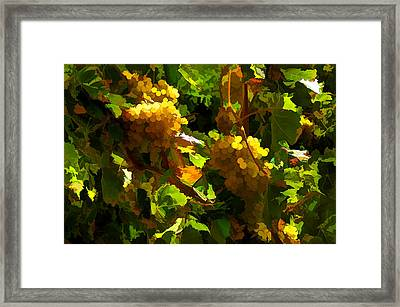 Vineyard 01 Framed Print