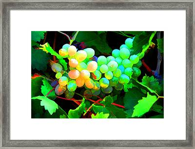 Vineyard 03 Framed Print