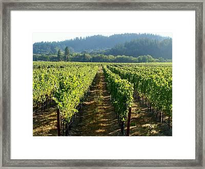 Vineyard At Harvest Framed Print by Kathleen Fitzpatrick