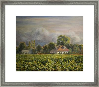Vineyard Fog Santa Rosa Framed Print