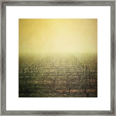 Vineyard In Mist Framed Print by Paul Grand Image