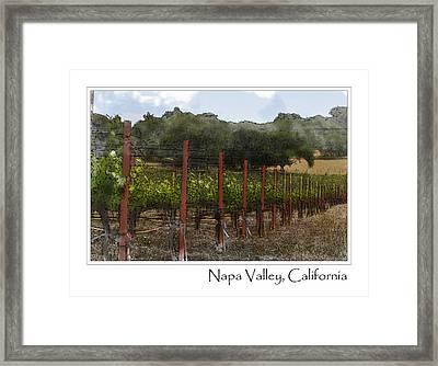 Vineyard In Summer Framed Print by Brandon Bourdages