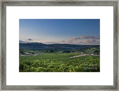 Vineyard In The Galilee Framed Print by Noam Armonn