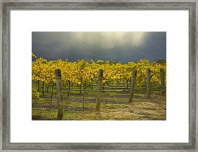 Vineyard Framed Print by John Doornkamp