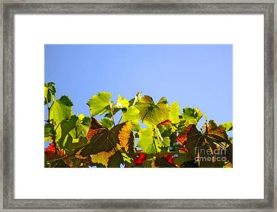 Vineyard Leaves Framed Print