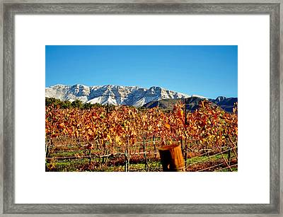 Vineyard Snow Topa Framed Print by Kristine Ellison
