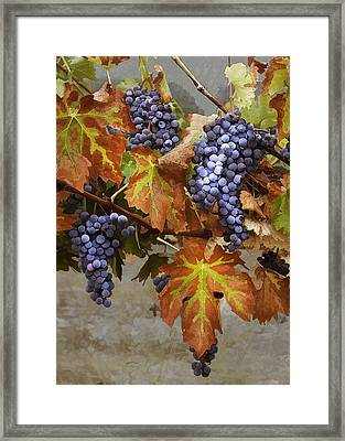 Vineyard Splendor Framed Print