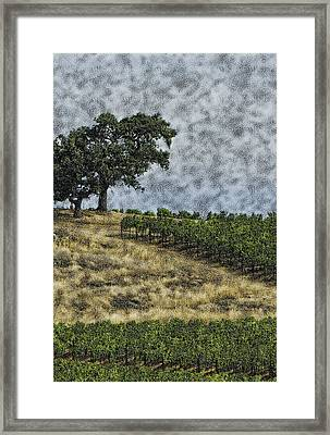 Vineyard Tree Framed Print