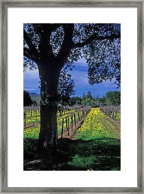 Vineyard View Framed Print by Kathy Yates