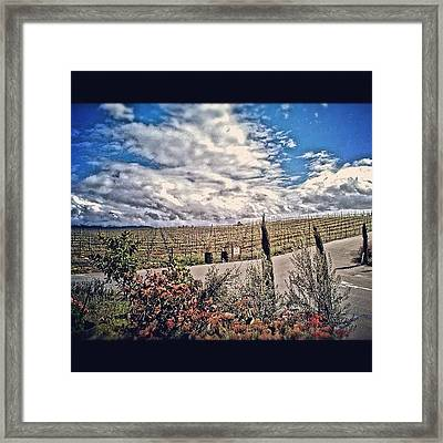 #vineyard #wine #winery #temecula Framed Print