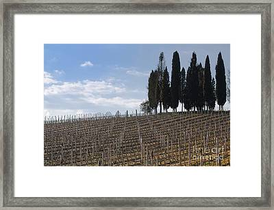 Vineyard With Cypress Trees Framed Print