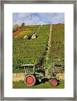 Vineyard With Tractor Framed Print