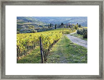 Vineyards And Farmhouse Framed Print by Jeremy Woodhouse