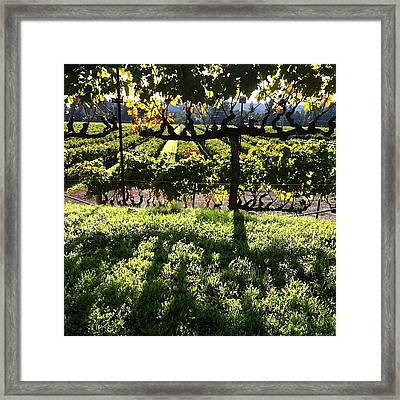 #vineyards At #sunset Framed Print