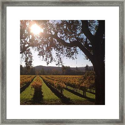 Vineyards In The Fall Framed Print