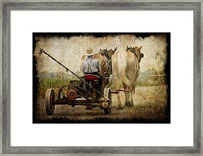 Vintage Amish Life D0064 Framed Print by Wes and Dotty Weber
