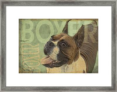 Vintage Boxer Dog Framed Print by Wendy Presseisen