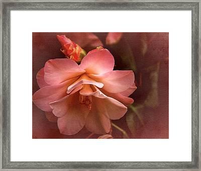 Vintage Camellia No. 1 Framed Print by Richard Cummings