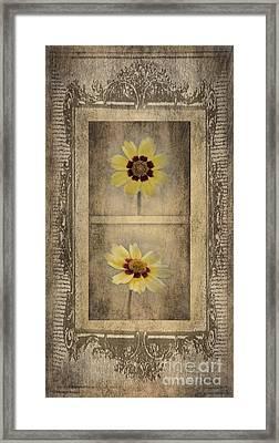 Vintage Coreopsis Framed Print