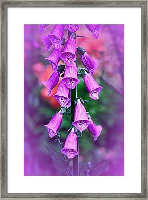 Vintage Foxgloves Framed Print by Richard Cummings