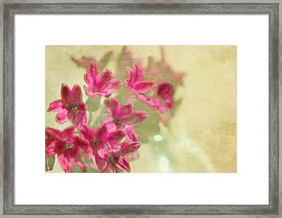 Vintage Hyacinth Framed Print by Margaret Hormann Bfa