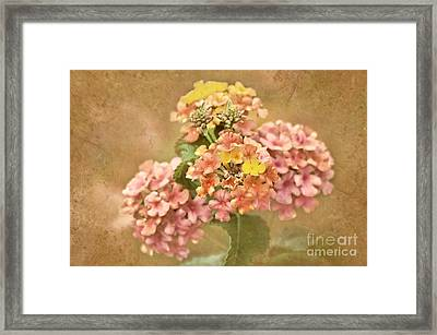 Framed Print featuring the photograph Vintage Lantana by Cheryl Davis