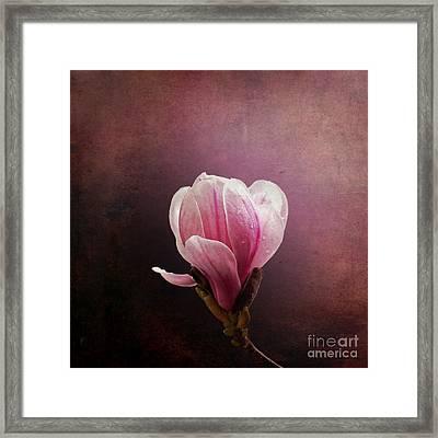 Vintage Magnolia Framed Print by Jane Rix
