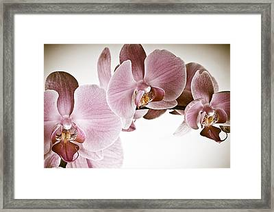 Vintage Orchid Framed Print by  Onyonet  Photo Studios