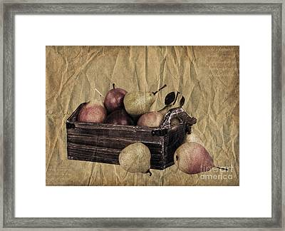 Vintage Pears Framed Print by Jane Rix