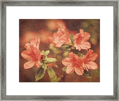 Framed Print featuring the photograph Vintage Pink Azaleas by Mary Hershberger