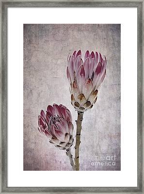 Vintage Proteas Framed Print by Jane Rix