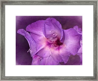 Vintage Purple Gladiola Framed Print by Richard Cummings