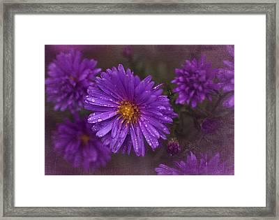 Vintage Purple  Framed Print by Richard Cummings
