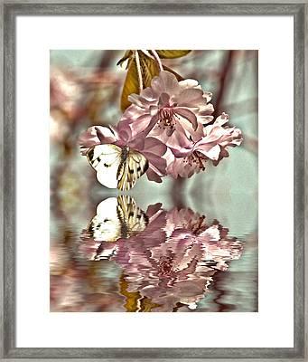 Vintage Reflections Framed Print by Sharon Lisa Clarke