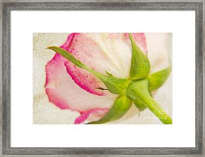 Vintage Rose Framed Print by Angela Doelling AD DESIGN Photo and PhotoArt