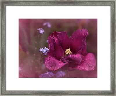 Vintage Tulip No. 2 Framed Print