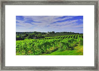 Vinyard View Framed Print by Coby Cooper