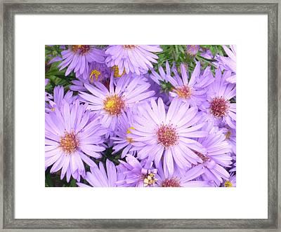 Violet Flowers Framed Print by Pamela Turner