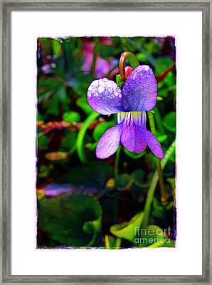 Violet With Dew Framed Print by Judi Bagwell