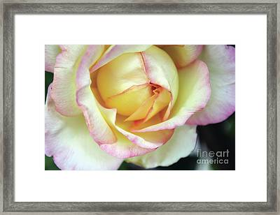 Virgin Beauty Framed Print