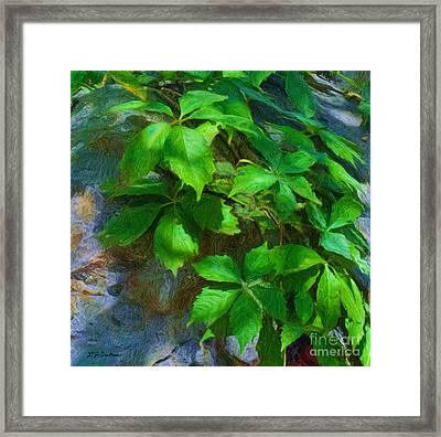 Virginia Creeper Framed Print